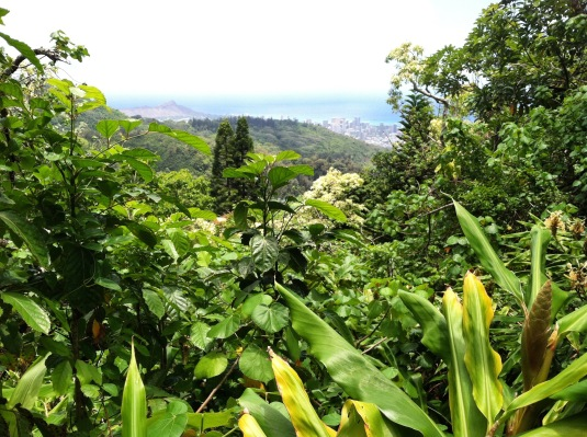 Manoa Valley (my backyard)